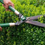 Hecke schneiden mit mechanischer Heckenschere