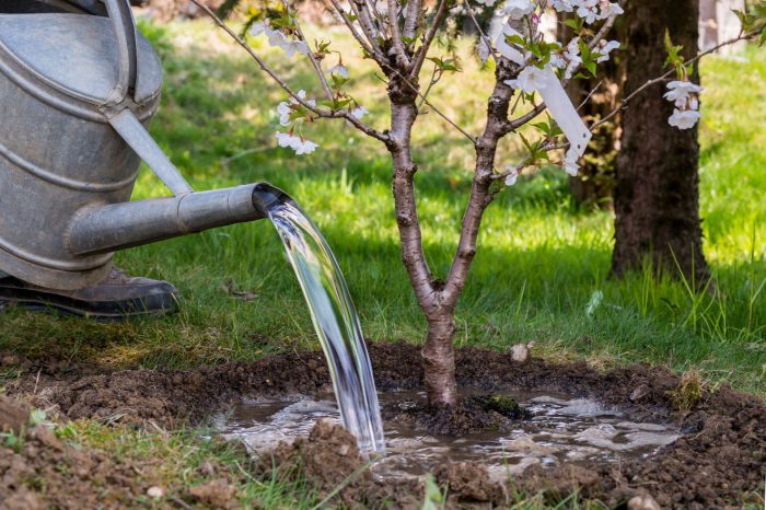 Junger Baum wird gegossen