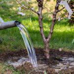 Frisch gepflanzter Baum wird gegossen
